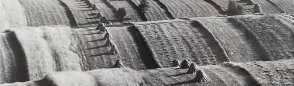 Klonówka-1978-r